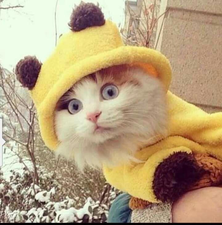 LOVE - Pica... Pica... Pikachu.... http://ift.tt/2rMhNgr