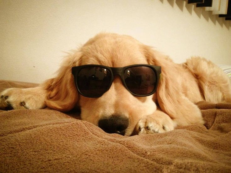 Ray Charles blind dog