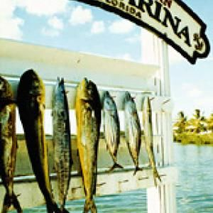 Best of the Florida Keys