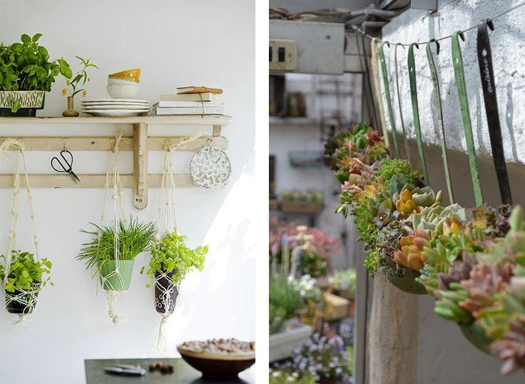 La fabrique d co des plantes dans la cuisine plantes - Plantes aromatiques cuisine ...