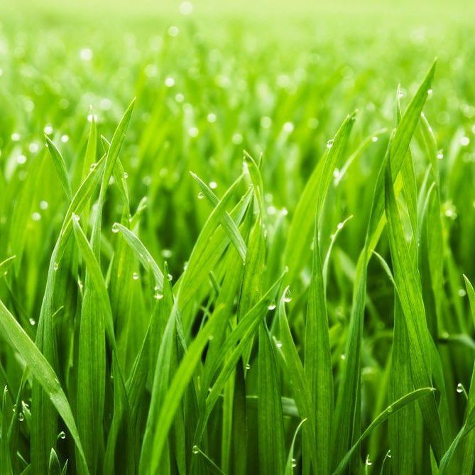 Need lawn for your yard?  Contact Beach Bay Landscaping today to find out how we can help you!  #instainpiration #outdoor #landscaping #summer #design #instadaily #lawn #grass #green #follow4follow   www.beachbaylandscaping.co.nz  ALL credit to Creators Designers and Photographers