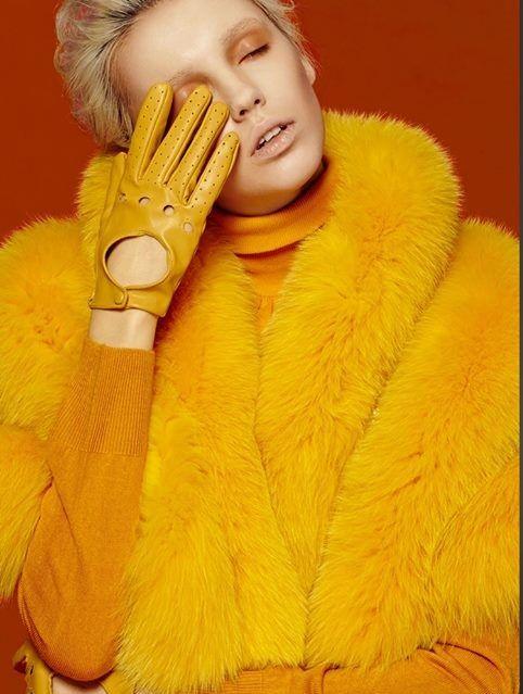 #yellow #fur #fox