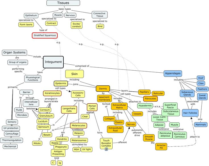 Concept Map integumentary | If you need help turning JavaScript On, click here.                                                                                                                                                     More