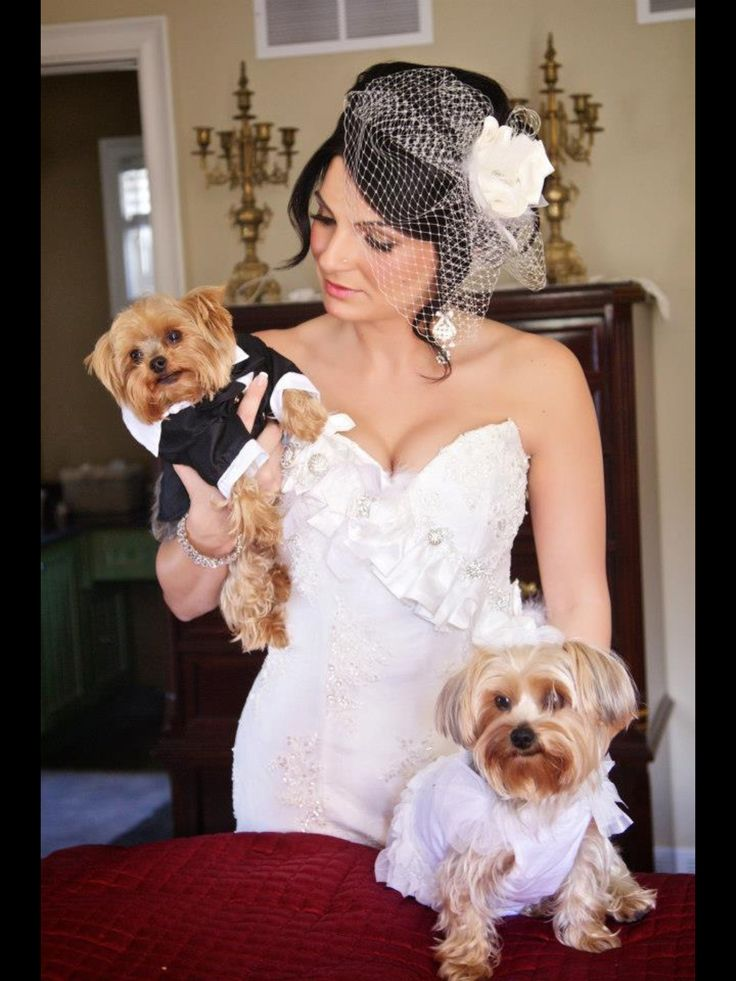 17 Best images about My Yorkie goedjies on Pinterest | Too ...
