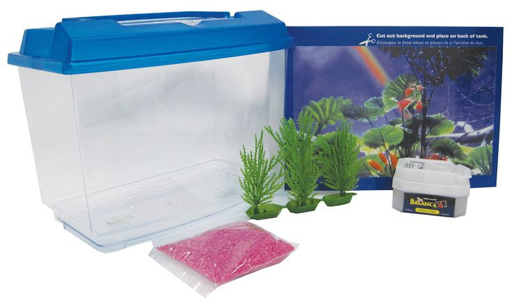 Best 25 betta aquarium ideas on pinterest for How often do i feed my betta fish