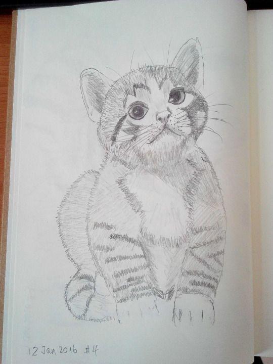 Cat sketching practice  #004