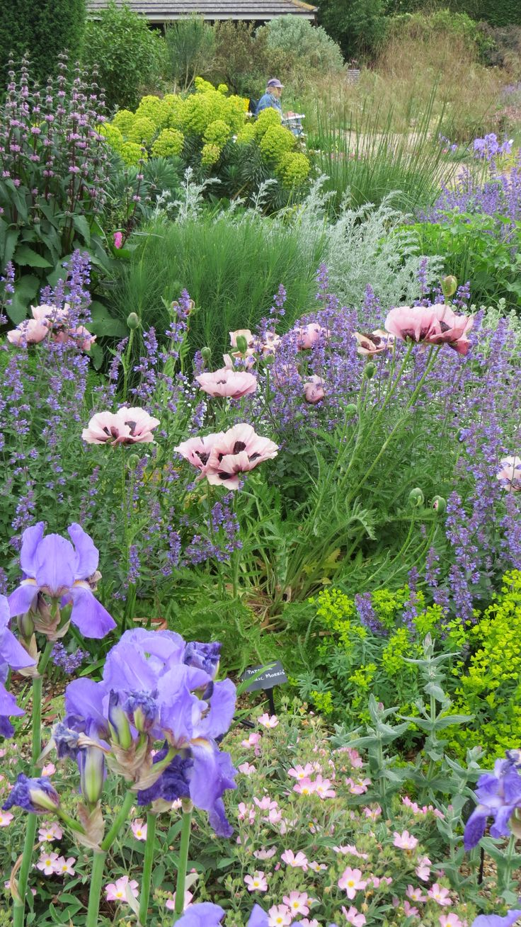 I feel very apprehensive, a bit like the little boy and the emperor's lack of clothes, because I am about to commit a heresy – criticising Betto Chatto's Gardens. As a garden designer, I know my 'Anthriscus sylvestris Ravenswing' from … Continue reading →