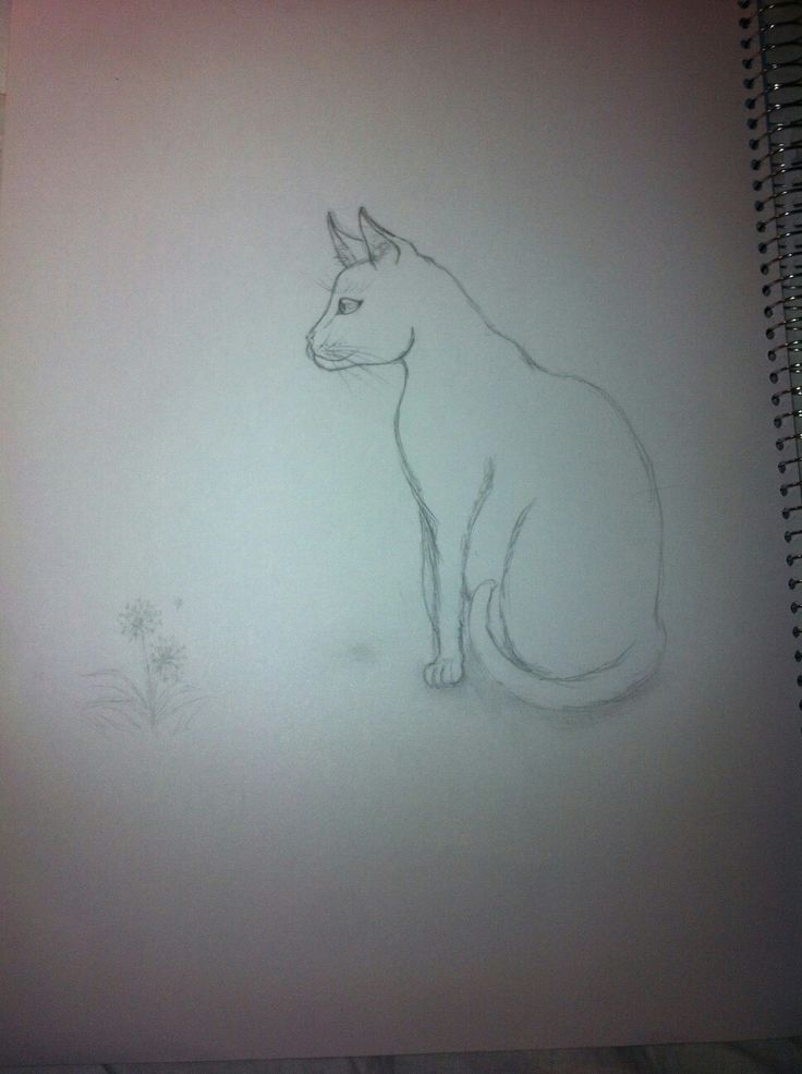 I looked at my cat and got inspiration for this drawing☆ ~Franca