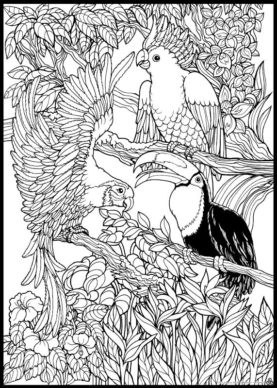 Jungle Coloring Pages For Adults