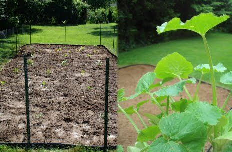 Time backyard vegetable gardening happy house and garden social site
