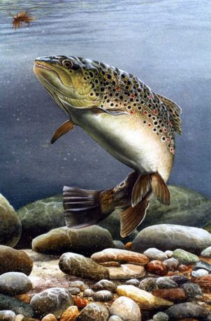 Trout by Sue Warner What can I say but, wow.