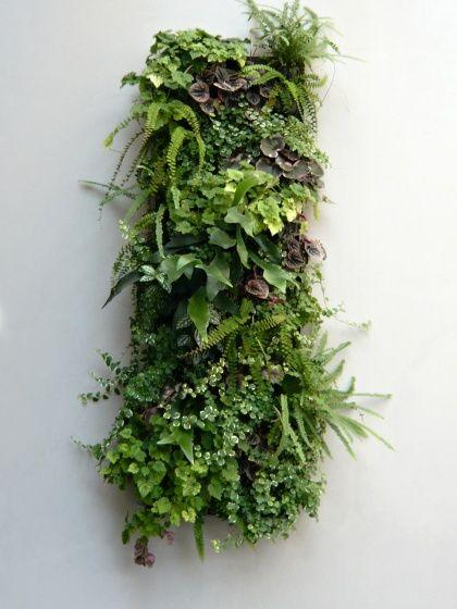 Cadre végétal - Flowall                                                                                                                                                                                 Plus