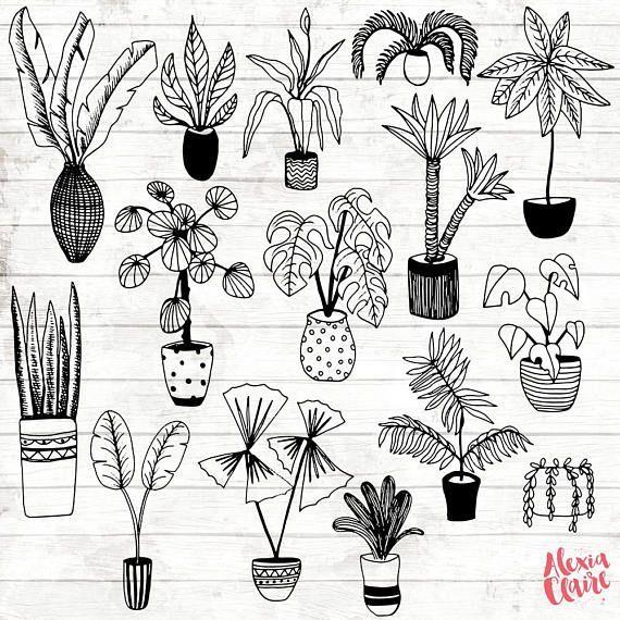 House Plant Clipart Hand Drawn Plants Clipart Potted Plant Art