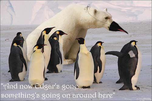 Funny Penguins | FUNNY Penguins - lol it's a penguin... AWESOME! http://m.youtube.com/watch?v=nvTEkcRlKnY