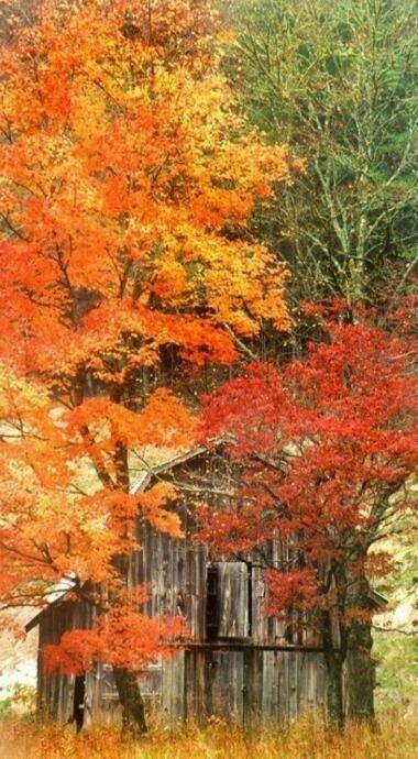 Old barn in an autumn setting.