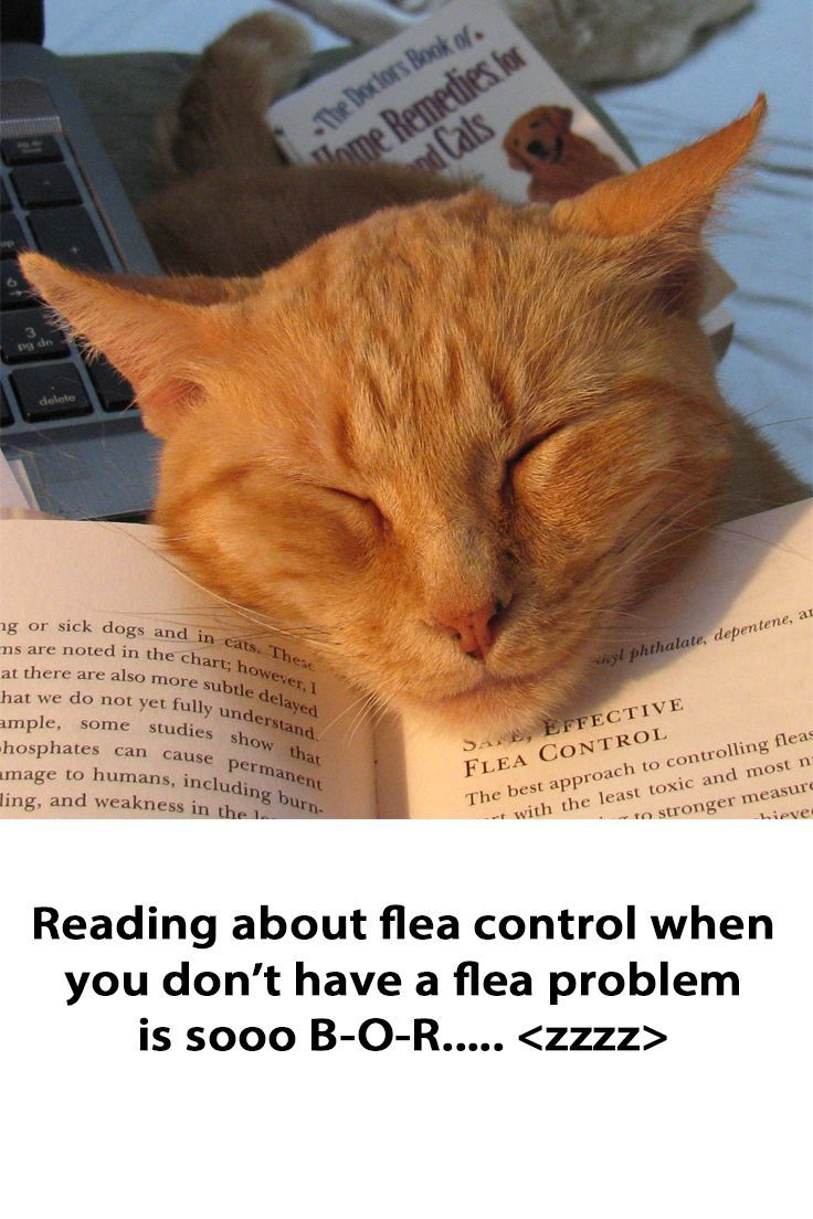 Don T Let Fleas Keep You Awake Try These Tips Saving Cat Cats Dog Cat
