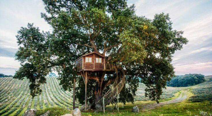 Уютное жилище в Коста-Рике и отель в гавайских джунглях, игровая площадка на заднем дворе и спа в лесу  и все это домики на деревьях. Мы собрали для вас самые оригинальные из них...