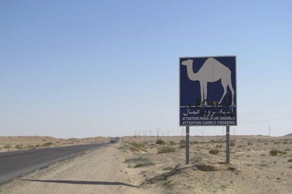 Avec ses 1300 km de côtes, la Tunisie est une destination attirante pour les amoureux du sable et de la mer. Mais il ne s'agit pas seulement d'un pays de plages. En quittant Tunis vers le sud, les voyageurs seront séduits par la Grande Mosquée de Kairouan ainsi que par le désert et les montagnes de Tozeur. Dépaysement garanti.
