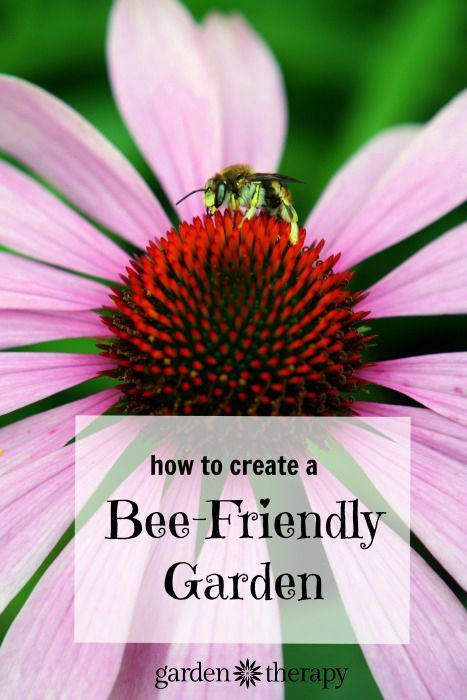 Attracting bees to the garden is like hiring a work force of full-time gardeners to help produce the strongest, most beautiful plants and healthiest vegetables. These hardworking insects, along with other pollinators, are the smartest thing you can cultivate in your garden, because they will do much of the work for you.  #ad #bee #garden