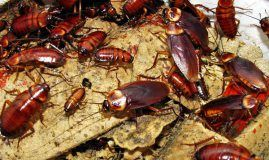 3 Natural Ways to Get Rid Of Cockroaches In your Home