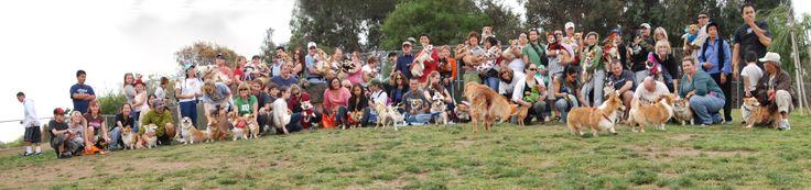 Wow - The San Diego Corgi Meet-up Group, that's a whole lotta corgi goin on!