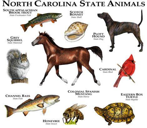 North Carolina State Mammal Symbols