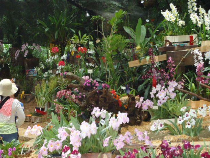 17 best images about fotos feria flores medell n colombia for Bodas en el jardin botanico medellin