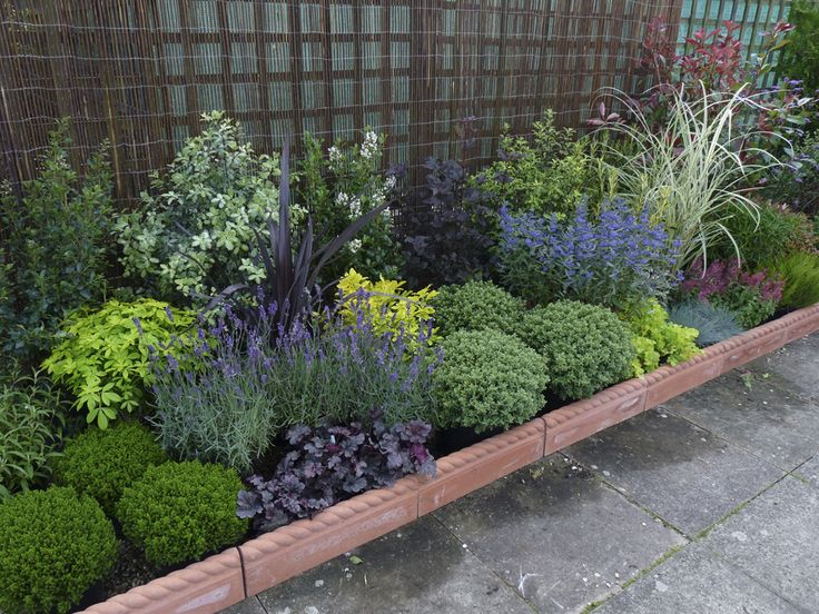 Evergreen Plants and Garden Borders from Garden On A Roll Ltd.  Great idea!  Lots of other different planting schemes too.