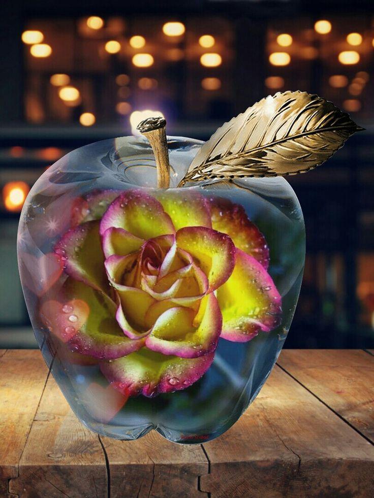 Alma rózsa..