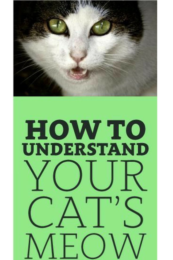 To Understand A Cat S Meow Pay Attention To The Length And Tone