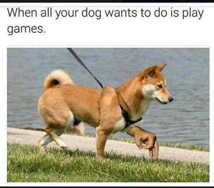 サークルゲーム