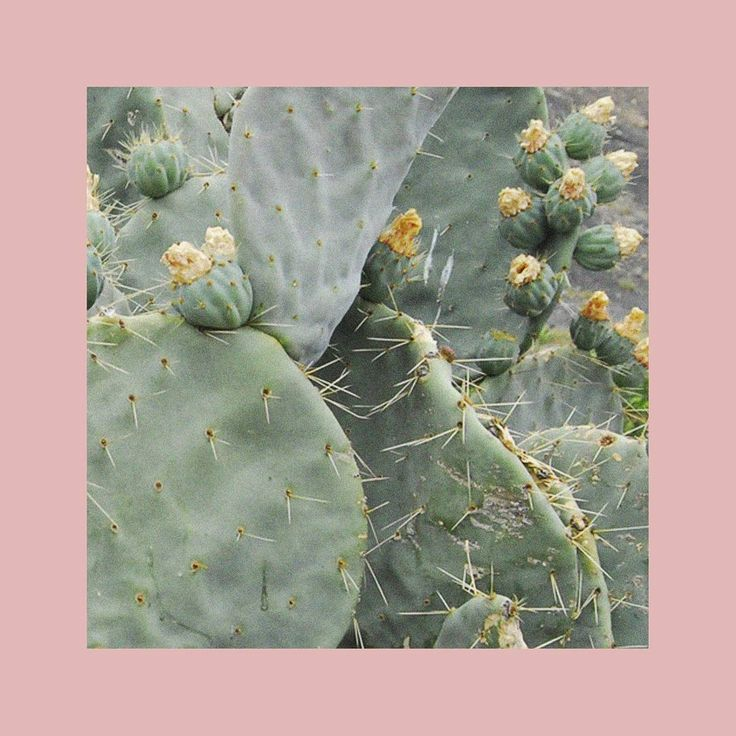 """""""Mi piace"""": 16, commenti: 3 - X-SCNT (@ex.scent) su Instagram: """"The smell of Summer #summer #olfaction #cactus #green #pink #perfume #scent #sotd #smell"""""""