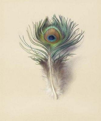 Peacock Feather 1880. John Ruskin