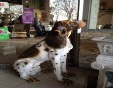 Hunting Dog Statue