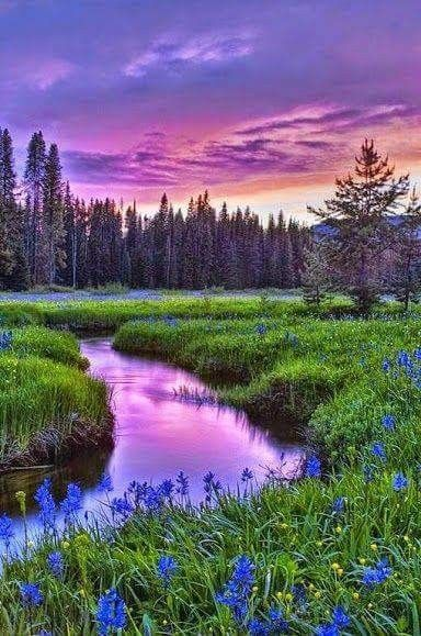 Beautiful Pictures Images The Most Beautiful Girl At World: Wildflowers By The Stream ~