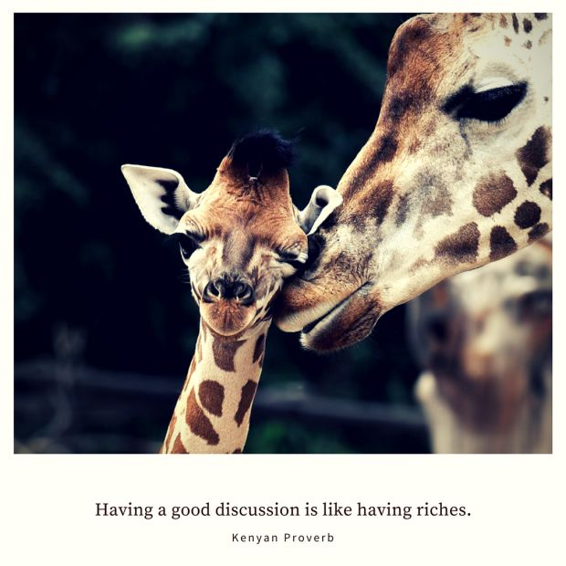 Having a good discussion is like having riches. – Kenyan Proverb (Cute giraffes)