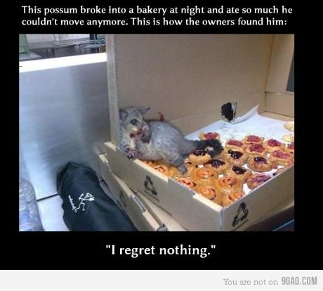 Soo funny and cute...for a possum