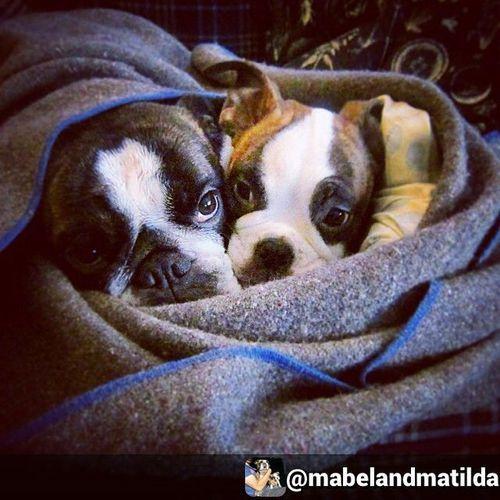 Puppy Love puppy class -  #puppies