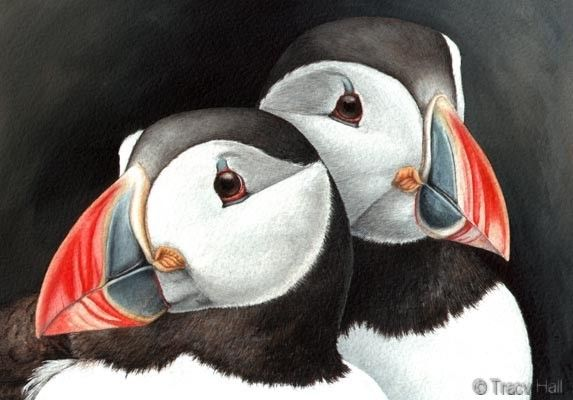Puffins watercolour wildlife painting by tracy hall