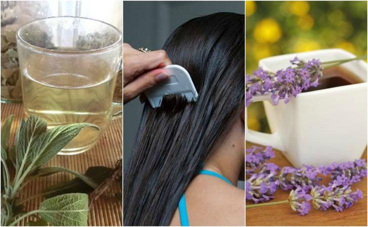 Los piojos y liendres no solo son desagradables, sino que pueden provocar irritación y comezón en el cuero cabelludo. Combátelos con 5 remedios herbales.