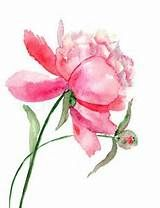 Peony Watercolor Tattoo - - Yahoo Image Search Results