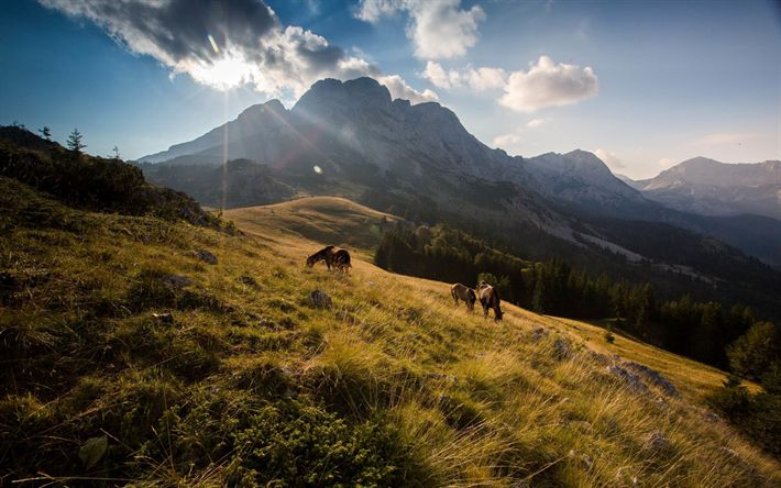 Download wallpapers Balkans, mountains, horses, summer, bright sun
