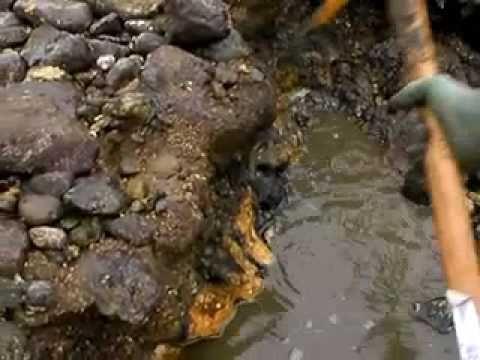 岩イソメ(マムシ)の採っている様子です。釣りエサに最適!天然の岩イソメです。先生は土屋名人。 渡船ダイゴ丸 http://www2.wbs.ne.jp/~daigomal/