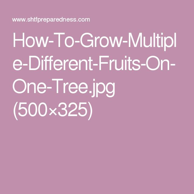 How-To-Grow-Multiple-Different-Fruits-On-One-Tree.jpg (500×325)