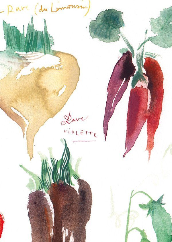 "Heirloom vegetables Archival giclee reproduction print from my watercolor illustration. Signed with pencil. Printed on fine art "" BFK Rives "" hot-pressed paper, smooth surface, 140 lb, 100% cotton (ac"