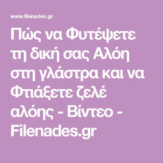 Πώς να Φυτέψετε τη δική σας Αλόη στη γλάστρα και να Φτιάξετε ζελέ αλόης - Βίντεο - Filenades.gr