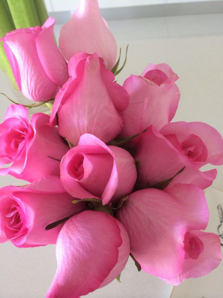 Beautiful Colombian roses