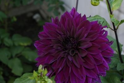 343 Best Images About Unique Flower Guide On Pinterest