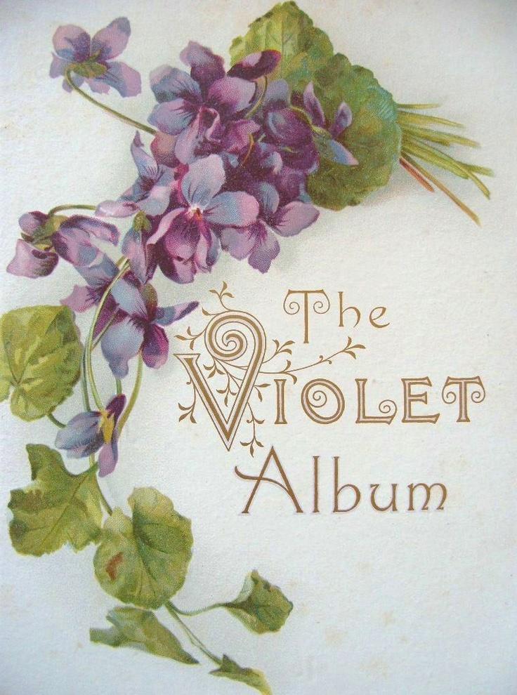 {Violet Ashes} The Violet Album vintage postcard #violet #violets #vintage