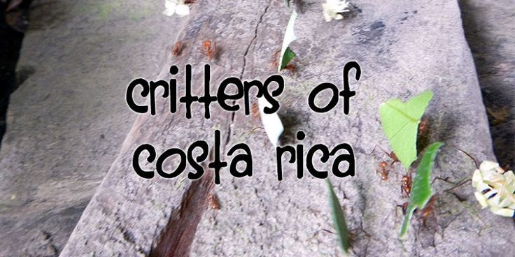 Insects, arachnids and critters of Costa Rica